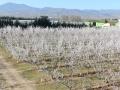 plantaciones-algairen-1