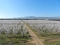 plantaciones-algairen-5