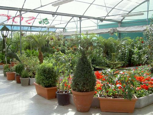 Soria jard n naturaleza en su hogar viveros mariano soria for Viveros de plantas en lima