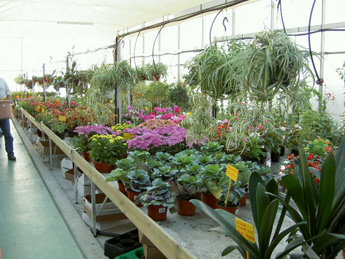 Soria jard n naturaleza en su hogar viveros mariano soria for Viveros ornamentales