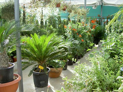 Soria jard n naturaleza en su hogar viveros mariano soria for Plantas decorativas ornamentales