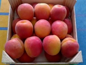 Резултат с изображение за maya cot apricot